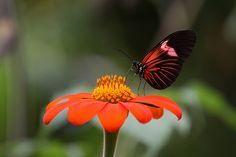 Nature Photos, Photography, Image, Photograph, Fotografie, Photoshoot, Fotografia