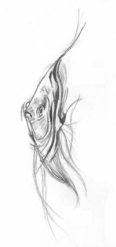 watercolor drawings tattoo ideas fish 2019 for 34 34 ideas tattoo watercolor fish drawings for can find Fish art and more on our website Fish Tank Drawing, Aquarium Drawing, Ocean Drawing, Fish Drawings, Art Drawings Sketches, Pencil Drawings, Water Drawing, Animal Sketches, Animal Drawings