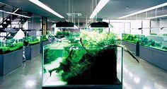 The ADA Nature Gallery in Nilgata,Japan. Every Nature Aquarium lover's pilgrimage site!