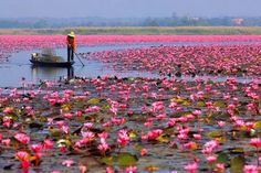 lotus lake kerala - Google Search