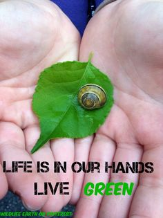Live Green! - Wildlife Earth on Pinterest