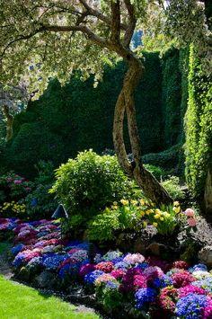 Vibrant garden. !