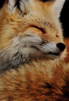 Fox love...♥