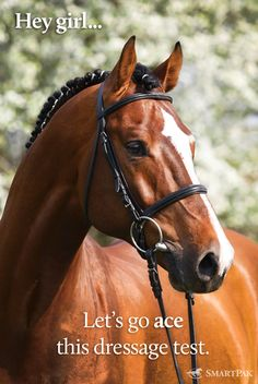 Says the Thoroughbred: you mean wildly canter around the ring with my head a mile in the air? Deal!