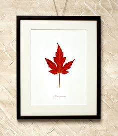 Wall Decor Red Acer Leaf  7x9'' Print on by RetroPhotographyArt