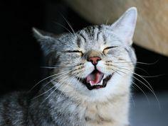 Gracias por seguirme también te sigo. Te invito visites mis blogs felinos http://ayudafelina.blogspot.com y http://relatosdeelgatooscuro.blogspot.com