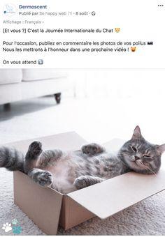 Défi photo - Dermoscent Cats, Animals, World Cat Day, International Cat Day, Starry Nights, Calendar, Gatos, Animales, Animaux
