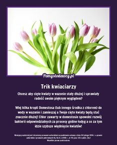 Tak wydłużysz czas stania ciętych kwiatów w wazonie. To trik kwiaciarzy. Simple Life Hacks, Home Hacks, Good Advice, Kids And Parenting, Good To Know, Home Remedies, Gardening Tips, Flower Power, Helpful Hints