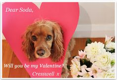 Love-pup! Valentine Doggie from Pretty Fluffy and Puppy Tales