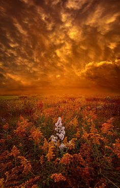 https://flic.kr/p/z7qrVz | South Wind | Wisconsin Horizons By Phil Koch. Lives in Milwaukee, Wisconsin, USA. phil-koch.artistwebsites.com