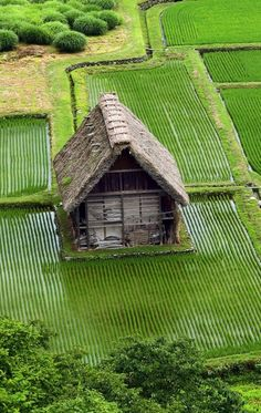 Seems to artistic to be real, but.it is. In Japan, amazing photographic opportunities are around every corner. Beautiful Places In The World, Places Around The World, Around The Worlds, Culture Art, Japanese House, Japanese Rice, Japanese Culture, Japan Travel, Places To Visit