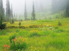 Don Paulson Solid-Faced Canvas Print Wall Art Print entitled Canada, British Columbia, Revelstoke National Park, Misty meadow scenic Peaceful Places, Beautiful Places, Beautiful Eyes, Champs, Natur Wallpaper, Poster Online, Amazing Nature, British Columbia, Wild Flowers