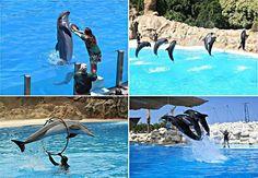 Dolphin Show in Hurghada. Isn't it beautiful to watch ?