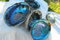 How to Clean Abalone Shells for Jewelry | eHow