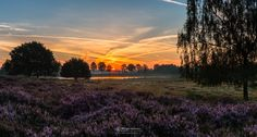 Photo Panorama - Heather Sunrise in nature reserve Eckeltse Bergen part of…