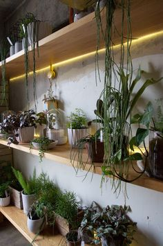 Wall of plants at The Botanist, City Works Depot Auckland | Styled Canvas