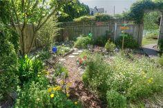 garden---needs a little grass but like it---good for front yard. 2313 Rucker in Everett
