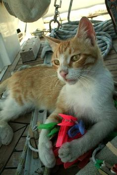 Ship's Cat, even at sea they love their toys!