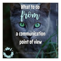 An animal communicators advice on what to do when your pet is missing. Guardian Angels, Pet Safe, Have A Beautiful Day, New Relationships, Love Signs, Anxiety Relief, Rainbow Bridge, Point Of View
