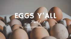 Eggs Y'All: Part 1