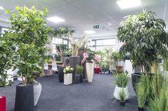 Overzicht kunstplanten en plantenbakken showroom Ede