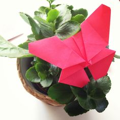 Mariposa - origami Butterfly - origami