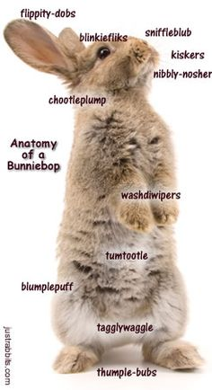 Funny look at the different body parts of a rabbit bunnie-bop. Please note chootleplumps are only found in female flopsy-dopples.