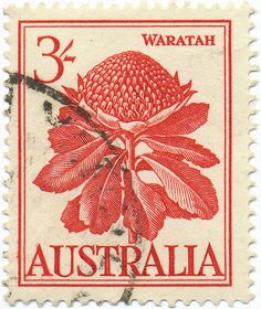 1959 Australian Stamp - Blown up stamps wall art? Graffiti Artwork, Postage Stamp Art, Going Postal, Photocollage, Vintage Stamps, Fauna, Mail Art, Stamp Collecting, My Stamp