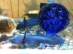 Blue Axolotl | The Cute Axie Pictures Thread #2-imageuploadedbytapatalk1362483302 ...