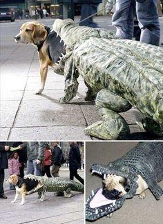Dog bliver spist af croc