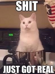 white cat memes - Google Search
