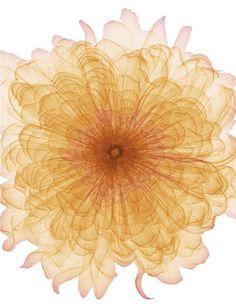 flower scan