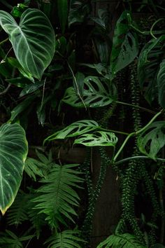PLANT LIFE focus on indoor plants – as opposed to the tropical foliage of… Green Plants, Tropical Plants, Tropical Leaves, Tropical Forest, Tropical Flowers, Plants Are Friends, Shades Of Green, Houseplants, Indoor Plants