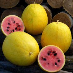 Melon seeds Golden Ukraine heirloom Organic Vegetable seeds