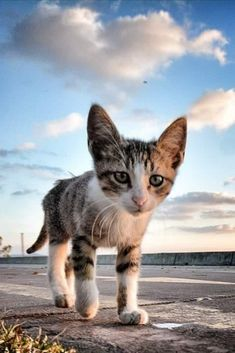 Kitty Cats, Kittens, Cats In Ancient Egypt, Cute Cats, Egyptian, Animals, Cute Kittens, Pretty Cats, Animales