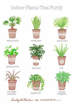 Simple Natural Living: The best air purification systems for your home . - Simple Natural Living: The best air purification systems for your home … - Natural Living, Natural Life, Simple Living, Simple Home, Natural Home Decor, Clean Living, Best Air Purifying Plants, Air Purify Plants, Plantas Indoor