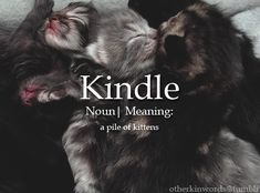catkin cute otherkin words kincuddles.tumblr.com