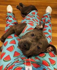 This amazing pitbull puppy will bring you joy. Dogs are incredible friends. Cute Funny Animals, Funny Animal Pictures, Cute Baby Animals, Animals And Pets, Pet Pictures, Cute Dogs And Puppies, I Love Dogs, Doggies, Beautiful Dogs