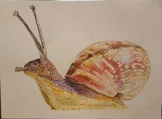 Garden Snail Watercolor 11x15'' : Watercolor
