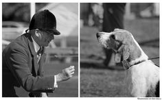 English Foxhound with rough hair? Basset Hound, Beagle, Basset Artesien Normand, Griffon Nivernais, Grand Basset Griffon Vendeen, English Foxhound, English Breakfast Tea, Fox Hunting, The Fox And The Hound