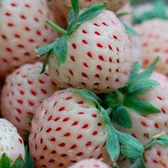 Strawberry 'Anablanca'