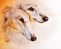 Barzoi, Windhond, Sighthound, Greyhound, Watercolor, Dog Art print by Tanja Kooymans Art