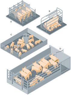 Cattle Farming, Goat Farming, Hog Farm, Raising Farm Animals, Goat Barn, Farm Layout, Happy Pig, Farm Plans, Cow Pictures