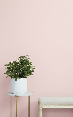 Baby Soft- A classic pink. Soft, warm, and sweet. Best light pink paint color by Clare, shop 55 interior designer curate Light Pink Paint, Light Pink Walls, Pink Paint Colors, Wall Colors, Light Pink Rooms, Pink Color, Pink Bedroom Walls, Bedroom Paint Colors, Bedroom Decor