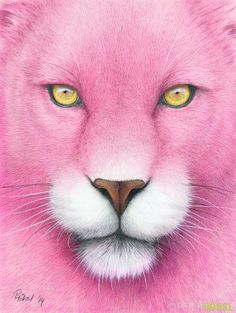 """""""A pink Panther"""" - A4 - colored pencil."""