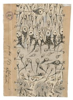 Beautiful Brain: The Stunning Drawings of Neuroscience Founding Father Santiago Ramón y Cajal – Brain Pickings