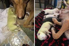 Nas Filipinas, filhote de cachorro nasce com pelo verde - GreenMe Brasil Labrador, Rarity, Kittens And Puppies, Puppys, Animals, Brazil, Green Hair, Gatos, Philippines