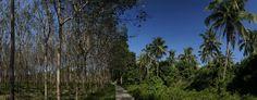 Plantation Vs Jungle http://madipix.com/plantation-vs-jungle/