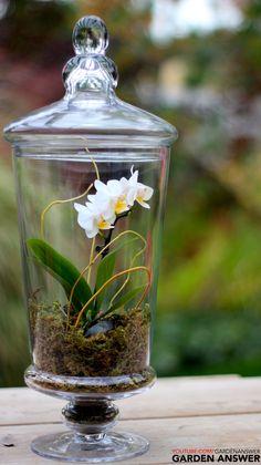 Orchid Terrarium www.youtube.com/gardenanswer www.facebook.com/gardenanswer