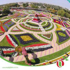 Dubai é um lugar sempre lembrado por seus altos prédios e sua modernidade, mas também pode ser lembrado pelo bom gosto de quem cria jardins. O Al Ain Paradise é um lugar que reúne design e uma linda escolha de flores e cores que chamam a atenção de todos, até mesmo por fotos.